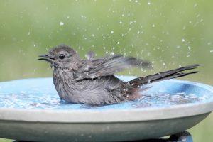 Best Heated Bird Baths